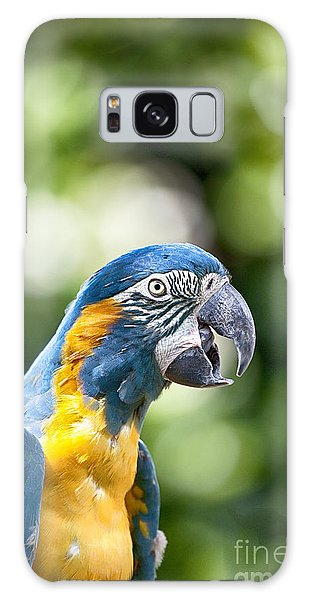 Blue And Gold Macaw V2 Galaxy Case by Douglas Barnard