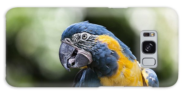 Blue And Gold Macaw V5 Galaxy Case by Douglas Barnard