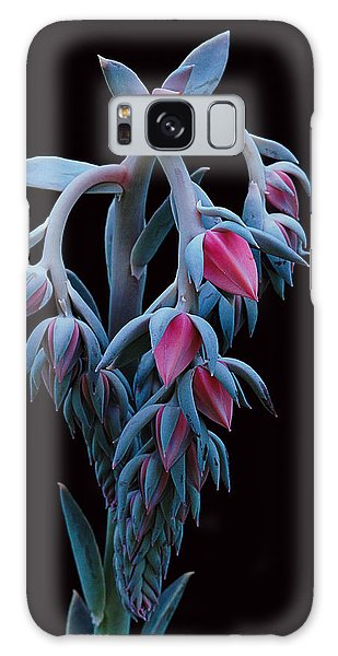 Blue And Pink Succulent Galaxy Case