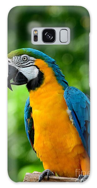 Blue And Yellow Gold Macaw Parrot Galaxy Case