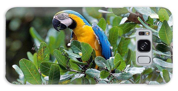 Blue And Yellow Macaw Galaxy Case by Art Wolfe