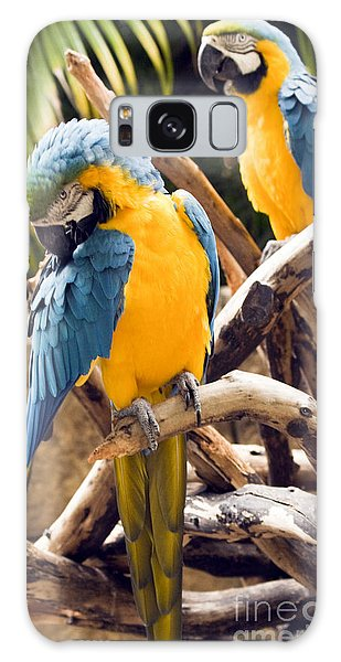 Blue And Yellow Macaw Pair Galaxy Case by Darleen Stry