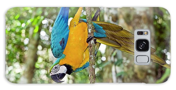 Macaw Galaxy Case - Blue And Yellow Macaw by Tony Camacho/science Photo Library