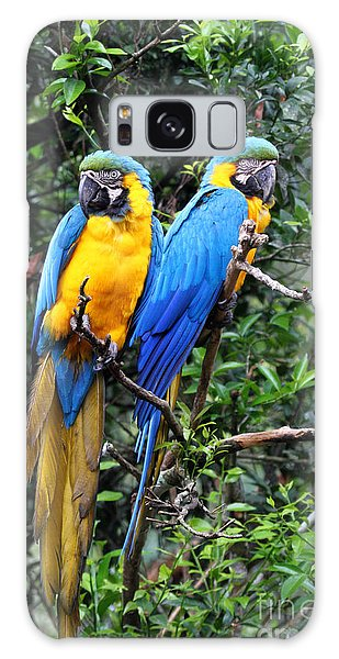 Blue And Yellow Macaws Galaxy Case