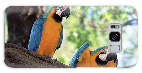 Macaw Galaxy Case - Blue And Yellow Macaws by Tony Craddock/science Photo Library