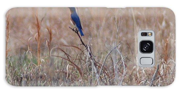 Blue Bird Galaxy Case by Mark McReynolds