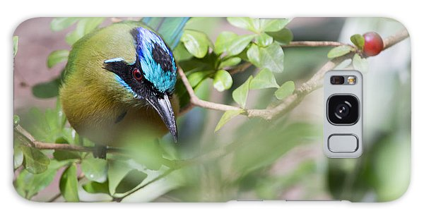 Blue-crowned Motmot Galaxy Case by Rebecca Sherman