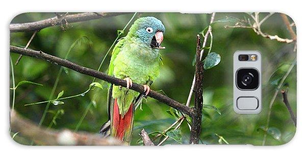 Blue Crowned Parakeet Galaxy Case