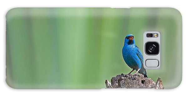 Blue Dacnis Galaxy Case