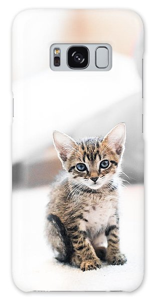 Blue Eyed Kitten Galaxy Case by Shelby  Young