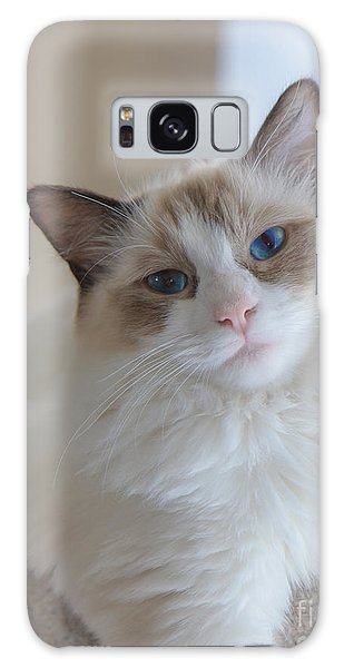 Blue-eyed Ragdoll Kitten Galaxy Case by Peta Thames