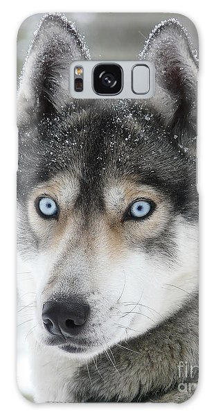 Blue Eyes Husky Dog Galaxy Case by iPics Photography