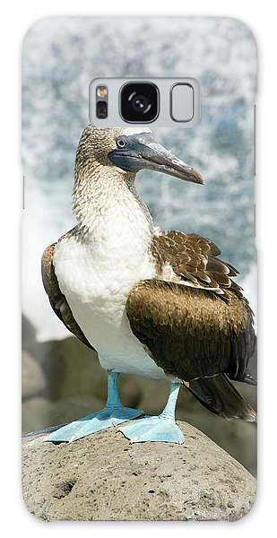 Blue-footed Booby Galaxy Case