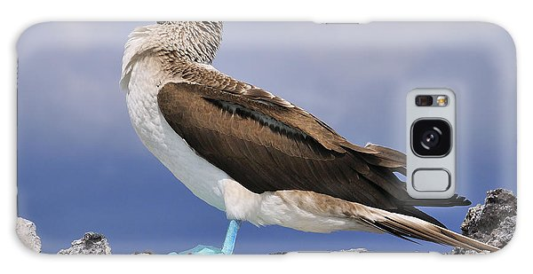 Boobies Galaxy Case - Blue-footed Booby by Tony Beck