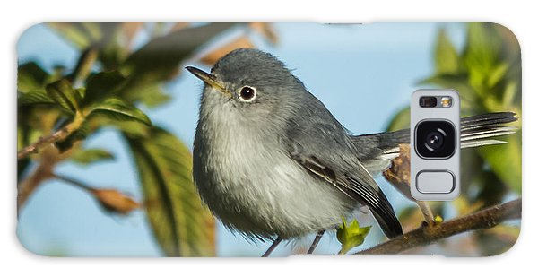Blue-gray Gnatcatcher Galaxy Case by Jane Luxton