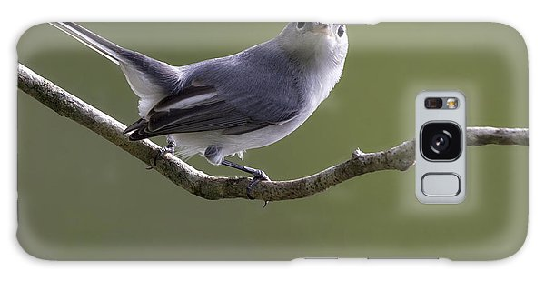Blue-gray Gnatcatcher Galaxy Case by Meg Rousher