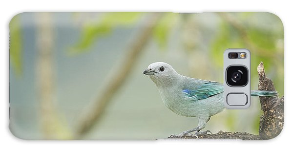 Blue-gray Tanager Galaxy Case