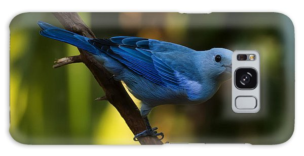 Blue Grey Tanager Galaxy Case by Chris Flees