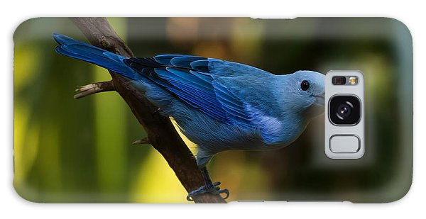 Blue Grey Tanager Galaxy Case