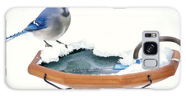 Blue Jay At Heated Birdbath Galaxy Case