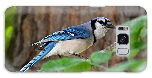 Blue Jay Beauty Galaxy Case by Eve Spring