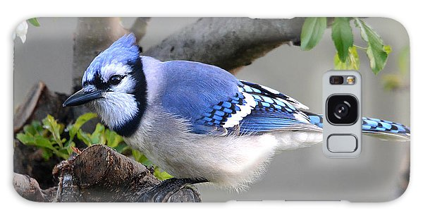 Blue Jay Beauty Galaxy Case by Nava Thompson