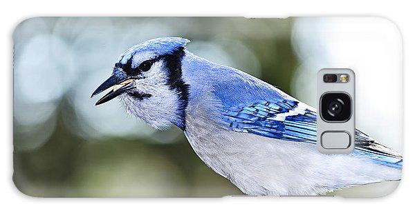 Blue Jay Bird Galaxy Case