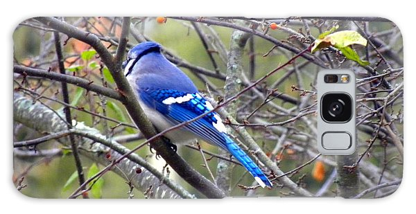 Blue Jay In A Cold Morning  Galaxy Case