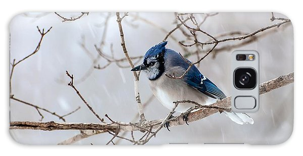 Blue Jay In Blowing Snow Galaxy Case by Debbie Green