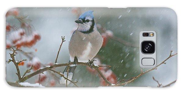 Blue Jay In Snow Galaxy Case