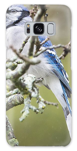 Blue Jay In The Rain Galaxy Case