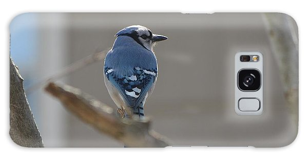Blue Jay Galaxy Case