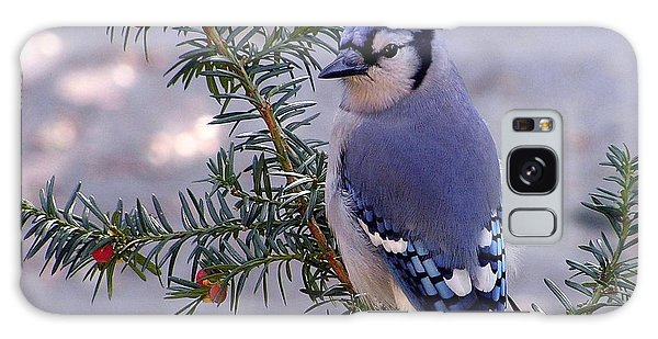 Blue Jay - Morning Visitor  Galaxy Case