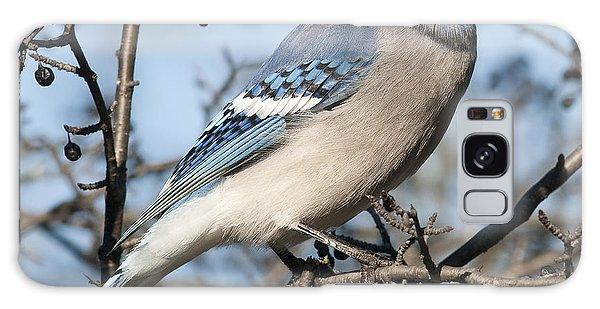 Blue Jay.. Galaxy Case