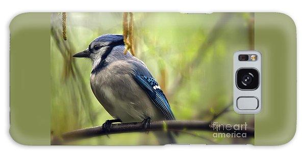 Blue Jay On A Misty Spring Day Galaxy Case