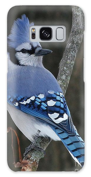 Blue Jay Winter Galaxy Case