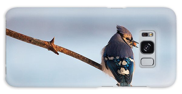 Blue Jay With Nuts Galaxy Case