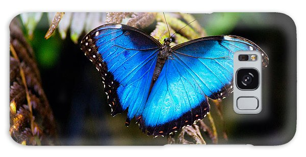 Blue Morpho Butterfly Galaxy Case