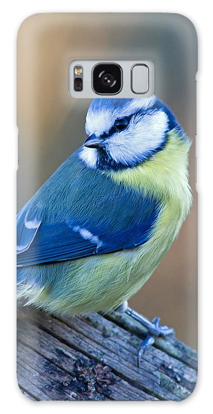 Blue Tit Looking Behind Galaxy Case