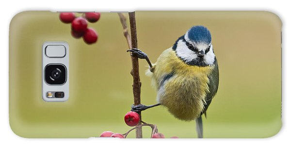Blue Tit With Hawthorn Berries Galaxy Case