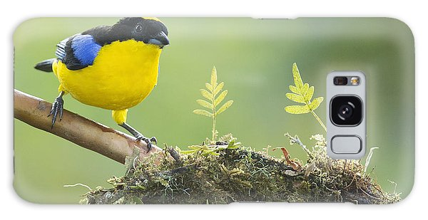 Blue-winged Mountain Tanager Galaxy Case