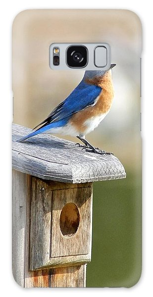 Bluebird House Hunting Galaxy Case