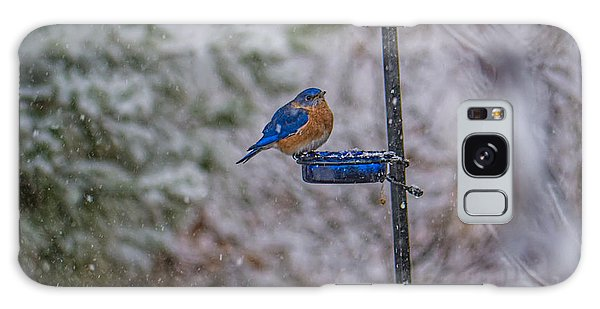 Bluebird In Snow Galaxy Case