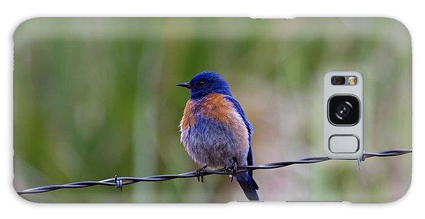 Bluebird On A Wire Galaxy S8 Case