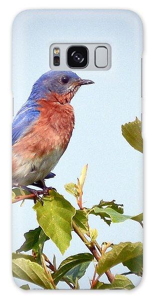Bluebird On Top Galaxy Case by Kerri Farley