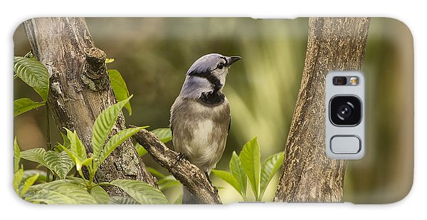Bluejay In Fork Of Tree Galaxy Case by Anne Rodkin