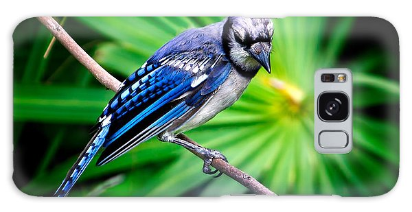 Thoughtful Bluejay Galaxy Case by Mark Andrew Thomas