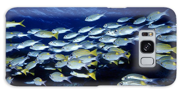 Bluelined Snappers And Yellowspot Emperors Galaxy Case