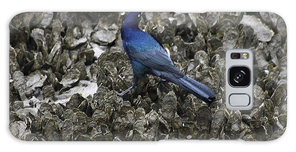 Boat-tailed Grackle Feeding Galaxy Case