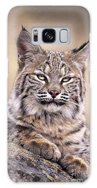 Bobcat Cub Portrait Montana Wildlife Galaxy Case by Dave Welling